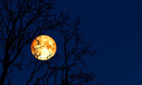 March's 'Super Worm Moon': What and when is it?