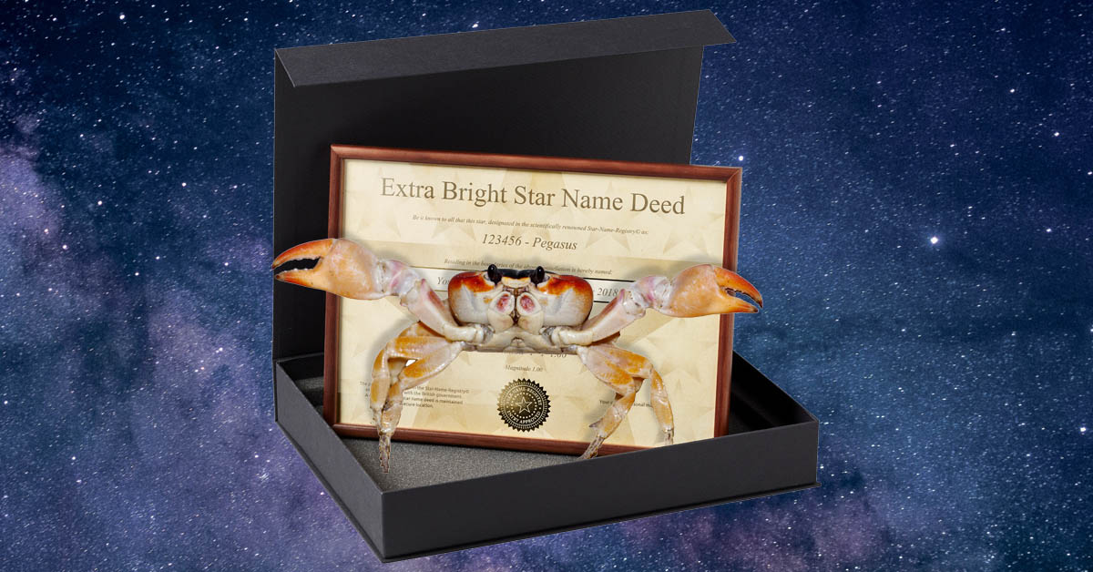 Register a Star. Crab not included